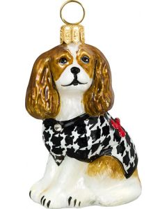 Cavalier King Blenheim with Hounds Tooth Coat