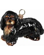 Cavalier King Charles - Black & Tan