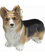 Pembroke Welsh Corgi Tricolored
