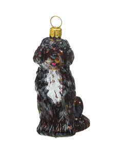 Portuguese Water Dog Brown