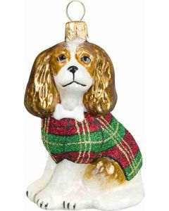 Cavalier King with Tartan Coat