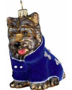 DIVA Yorkshire Terrier in Blue Velvet Coat - Now on Clearance!
