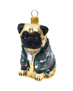 Pug Fawn in Camo and Dog Tags